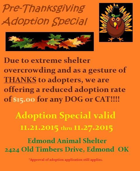 Shelter pre Thanksgiving special